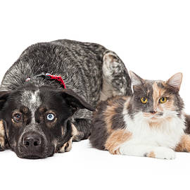 Colorful Cattle Dog and Calico Cat - Susan Schmitz