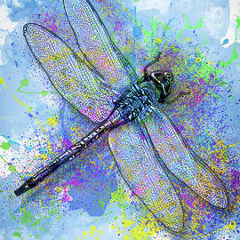 Jack Zulli - Colorful Dragonfly