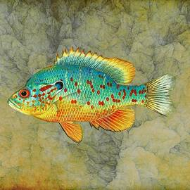 Lilia D - Colorful Fish