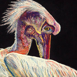 Jay Johnston - Colorful Pelican