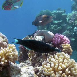 Colorful Red Sea 2