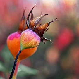 Rona Black - Colorful Rose Hips