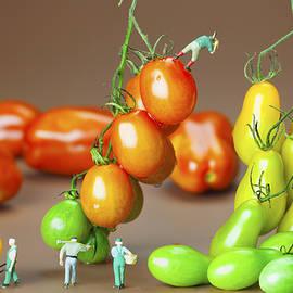 Paul Ge - Colorful tomato harvest little people on food