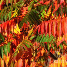 Colors leaves - SK Pfphotography