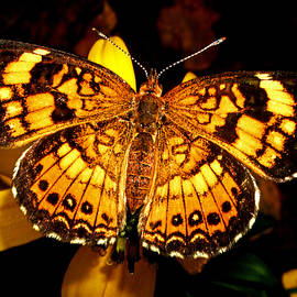 George Bostian - Colors Of Nature - Painted Lady Butterfly 002