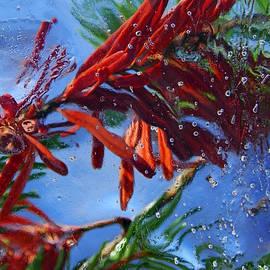Sami Tiainen - Colors of Nature