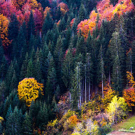 Colors Of Rhodope - Evgeni Dinev