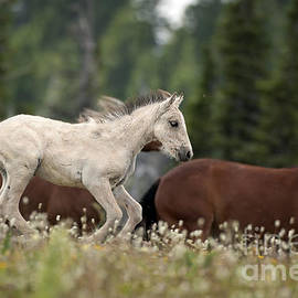 Wildlife Fine Art - Colt in the Wild