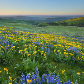 Mike Dawson - Columbia Hills Wildflower Dawn