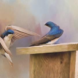 Jordan Blackstone - Coming Home To You - Bird Art