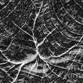 John Stephens - Complexity Black and White Abstract