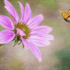 Cathy Kovarik - Coneflower and Butterfly