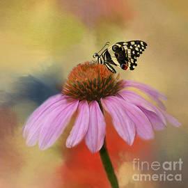 Kathleen Rinker - Coneflower and Butterfly