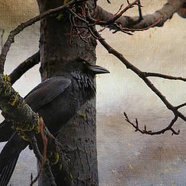 Perri Kelly - Consider the Raven