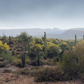 Gordon Beck - Cool Arizona Morning