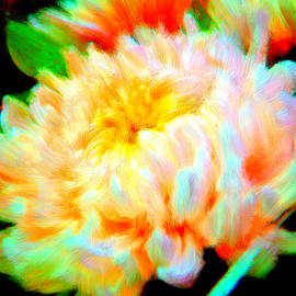 Bruce Nutting - Cool Colorful Chysanthemum
