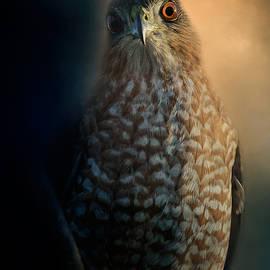 Jai Johnson - Coopers Hawk At Sunset