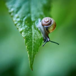 Jouko Lehto - Copse snail speed