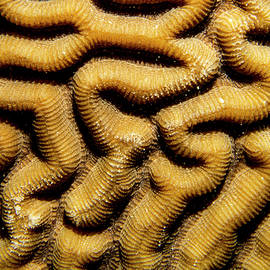 Coral Descent