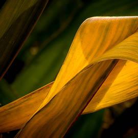 Mah FineArt - Corn Leaf