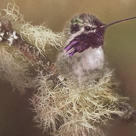 Teresa Wilson - Costas Hummingbird Painted