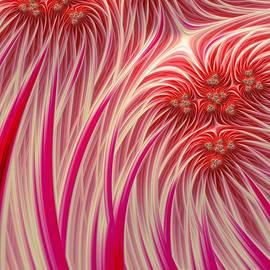 Cotton Candy - John Edwards