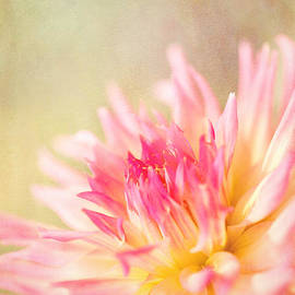 Beve Brown-Clark Photography - Cotton Candy