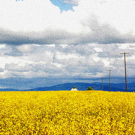 Ross Lewis - Cottonwood Canola