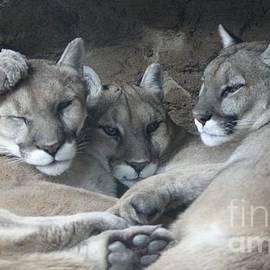 Deniece Platt - Cougar Trio