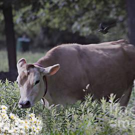 Linda Troski - Cow and Cow Bird
