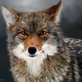 Johanne Dauphinais - Coyote