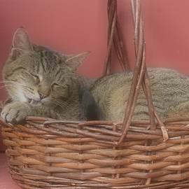 Marjorie Tietjen - Cozy Cat
