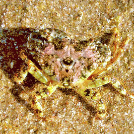 Crab on bech