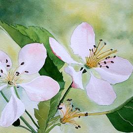 Jim Gerkin - Crabapple Blossom