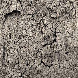 Tianxin Zheng - Cracked Earth