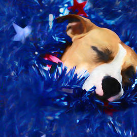 Shelley Neff - Cradled by a Blanket of Stars and Stripes