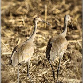 Janice Rae Pariza - Cranes and Colorado Cornfields