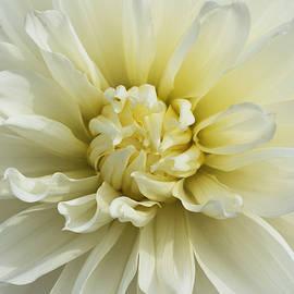 Richard Andrews - Cream
