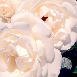 Helene Fallstrom - Creamy roses