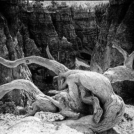 Jim Cook - Creatures of Bryce Canyon