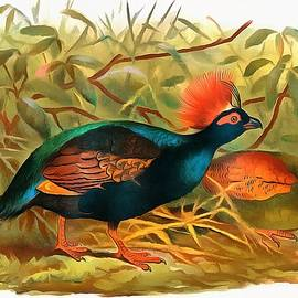 Sergey Lukashin - Crested partridge