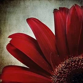 Melissa Bittinger - Crimson Drama Queen