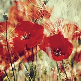 Kathy Franklin - Crimson Poppies