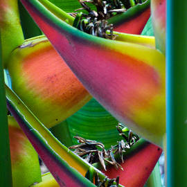 Jeanette Wygant - Criss Cross Rainbow