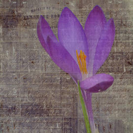 Lynn Bolt - Crocus with Text