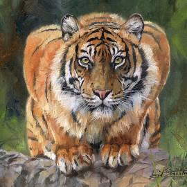 Crouching Tiger - David Stribbling