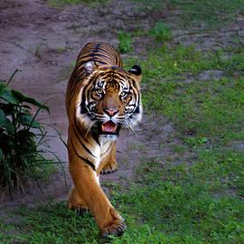 Luis Rosario - Crouching Tiger