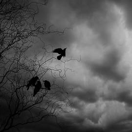 Crows - Wojciech Zwolinski