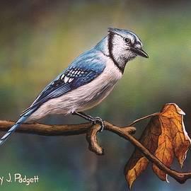 Anthony J Padgett - Curious Blue