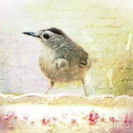 Tina LeCour - Curious Catbird